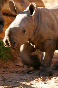 Free African White Rhino Royalty Free Stock Photos - 4427778