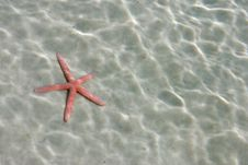 Star Fish Royalty Free Stock Images