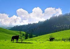 Free Meadow In Xinjiang Stock Photography - 4429062