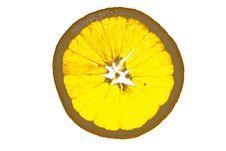 Free Translucent Slice Of Juicy Orange Royalty Free Stock Photography - 4429137