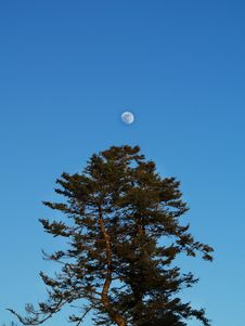 Free Tree And Moon Stock Photos - 4429333