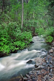 Free Flowing Creek Stock Images - 4429434