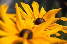 Free Yellow Flowers Royalty Free Stock Photos - 4429578