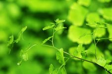 Free Green Leaves In The Wind Stock Photography - 4429712