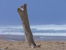 Free Tree Stump On Beach Royalty Free Stock Photos - 4429998