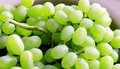 Free Green Grapes Stock Images - 4435714