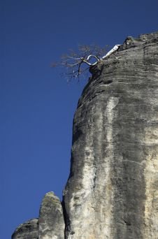 Free Dead Tree On The Edge Of The Rock Stock Images - 4430544