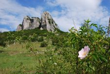 Free Flower And A Rocky Cliff Royalty Free Stock Photo - 4431515