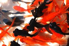 Free A Swarm Of Goldfishes Stock Photos - 4433633