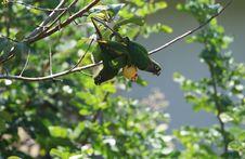 Free Parrots Stock Images - 4435614