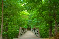 Free Rustic Bridge In The Woods Royalty Free Stock Photos - 4437448