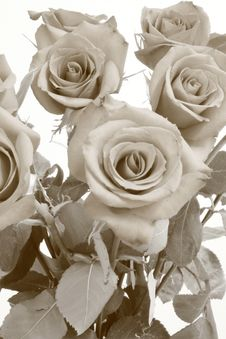Free Bouquet Of Roses Stock Photos - 4437963