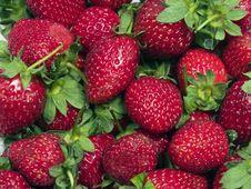 Free Strawberry-2 Stock Image - 4439051