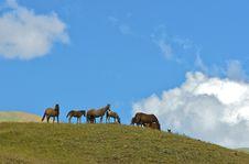Free Horses Royalty Free Stock Image - 4439096