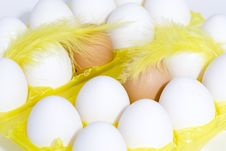 Free Eggs Stock Images - 4439714