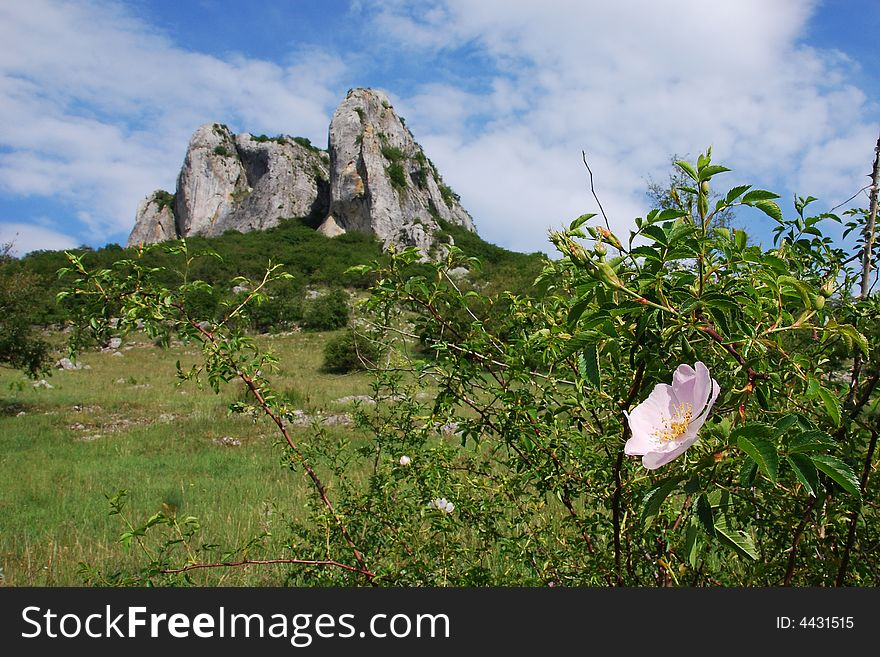 Flower and a rocky cliff
