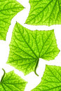 Free Green Leaf Pattern Royalty Free Stock Image - 4440356