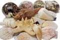 Free Assorted Seashells Isolated Stock Image - 4449901