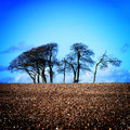 Free Bare Tree S In A Freshly Ploughed Field Stock Images - 4449934