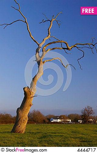 Free Dead Tree Royalty Free Stock Photography - 4444717