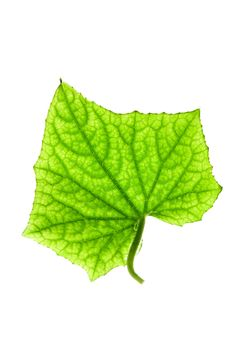 Free Green Leaf Stock Photography - 4440332