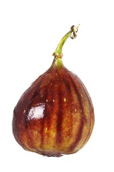 Free Fresh Fig With Drop Of Water Stock Photos - 4440963
