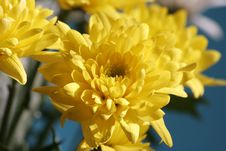 Free Flowers For Women Stock Photos - 4441243
