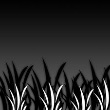 Free Black&White Grass [06] Stock Photography - 4441282