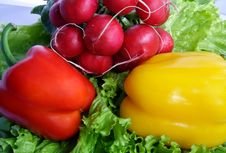 Free Vegetables With Salad, Radish And Pepper Royalty Free Stock Photos - 4441328