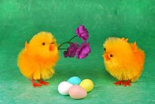 Free Easter Chicks Royalty Free Stock Photography - 4441647