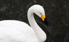 Free Goose Stock Photos - 4442183
