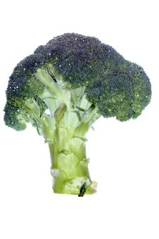 Fresh Green Broccoli Royalty Free Stock Photo