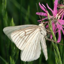 Free White Butterfly Stock Image - 4443341