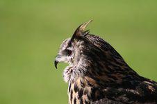 Free Owl Stock Image - 4443921