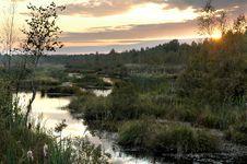Free Bog At Sunset Royalty Free Stock Photography - 4443957