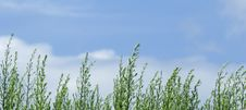 Free Grasses Against The Sky Stock Photo - 4444320