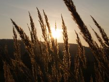 Free Dry Grass Royalty Free Stock Photography - 4444527