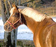 Free Horses 5 Stock Photo - 4444840
