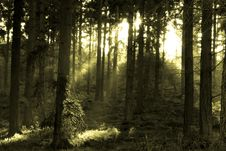 Free Forest Scene In Monotone Stock Images - 4445044