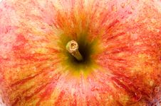 Free A Fresh Red Apple Stock Photography - 4446092