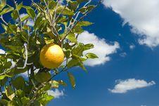 Free An Orange And Blue Skies Royalty Free Stock Photo - 4446805