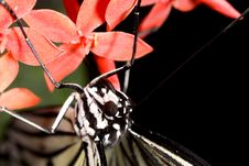 Free Closeup Of White Butterfly On Red Flower Stock Photography - 4447642