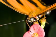 Free Butterfly Taking Nectar From A Flower Royalty Free Stock Photography - 4447677