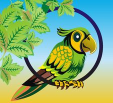Free Parrot Royalty Free Stock Photo - 4447805