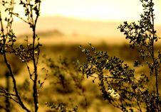 Free Desert Landscape (sepia) Royalty Free Stock Image - 4448166