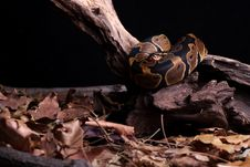 Free Snake Stock Photography - 4448642