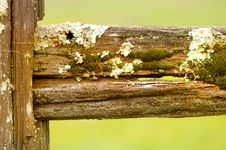 Free Moss And Lichen Royalty Free Stock Image - 4448676