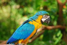 Free Colorful Parrot In The Garden Royalty Free Stock Image - 4449436