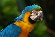 Free Colorful Parrot Royalty Free Stock Photos - 4449488