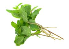 Fresh Mint Herb Stock Photo
